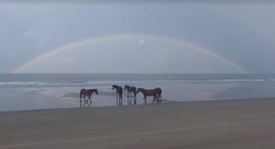 Tuesday Video: Corolla Horses Under a Rainbow