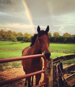 Retired Racehorse Project Showcase: Reflections on the Journey, Part 1