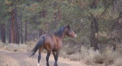 WARHorses: Wild Horses Win in Court