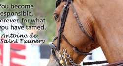 Best of JN: 10 Lit Quotes Definitely About Horses
