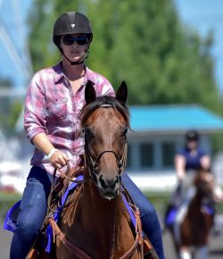Retired Racehorse Project Showcase: Reflections on the Journey, Part II