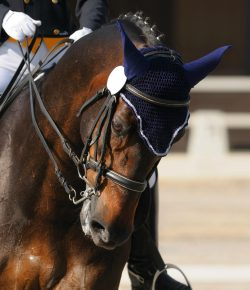 Equestrian Social Media: Dos & Don'ts for the Professional