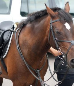 'Summer Bodies': Seasonal Saddle Fit Considerations