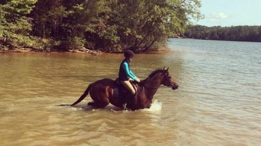 Retired Racehorse Project Showcase: Strengths, Weaknesses & Advice for Future Trainers, Part I