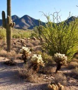 Fantasy Farm Thursday: Desert Gem