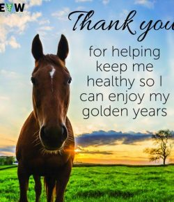 SmartPak Monday Morning Feed: Happy National Equine Veterinarian Week!