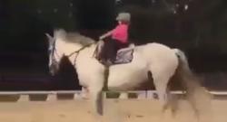 Thursday Video: Giant Horse, Tiny Rider