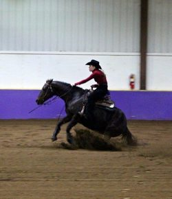 The Academic Equestrian: Learning Humility