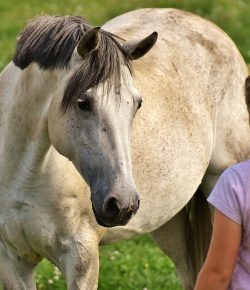 Getting Past Fear in Our Horse Lives