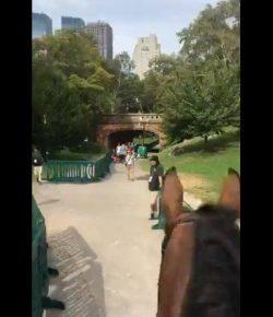 Best of JN: Ride a Fireball Through Central Park