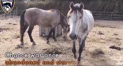 Thursday Video: Easy Horse Care in Spain