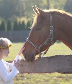 Having Horses vs. Having Kids