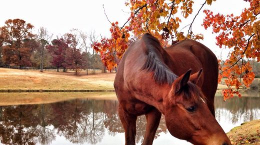 Photo Challenge: 35 Gorgeous Autumn Scenes From Around Horse Nation