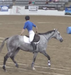 No Bridle, No Problem for Elisa Wallace's OTTB