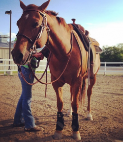 The Academic Equestrian: 5 Types of Lesson Horses