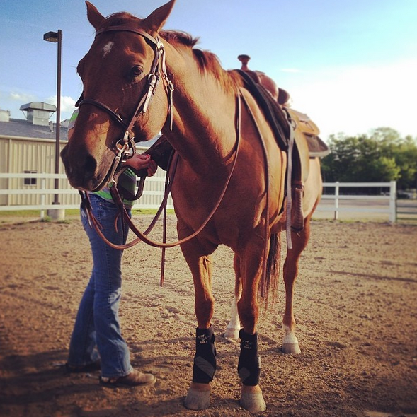 The Academic Equestrian 5 Types Of Lesson Horses Horse
