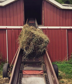 10 Things That Are Absolutely the Worst About Hay