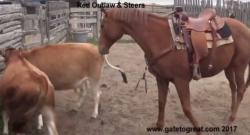 Thursday Video: The OTTB Cow Pony