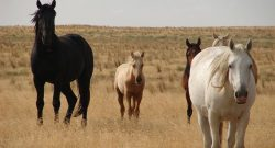 Wild Horse Advisory Board Makes Recommendations