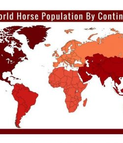 Info Graph: Global Horse Populations