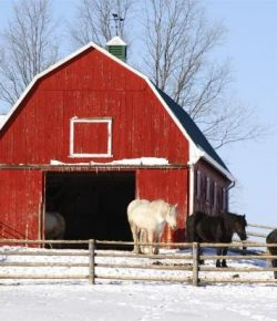 Kentucky Performance Products: Preparing Your Feed Room For Winter