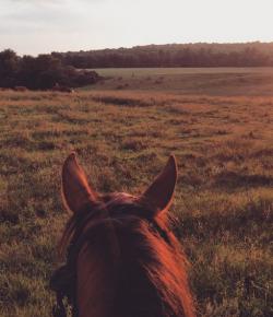 Life, Death & Horseback Riding