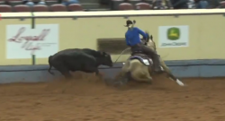 SpectraVET Performance: New Cow Horse Record