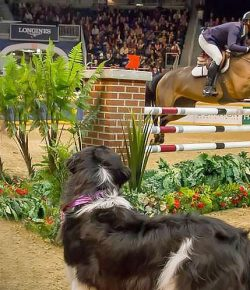 Best of JN: Show Jumper / Canine Relay