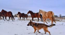 #horsenation 'Grams of the Week