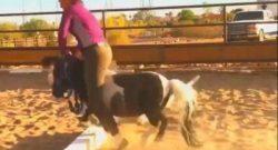 Best of JN: Grand Prix Rider, Meet 9HH Pony