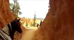 World Equestrian Brands HC: Bryce Canyon