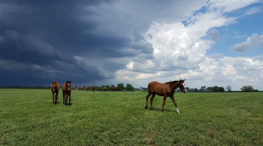 Photo Challenge: 46 Postcard-Worthy Equine Cloudscapes