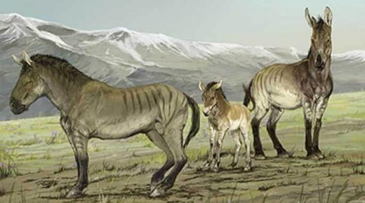 New Genus of Extinct Horse Discovered
