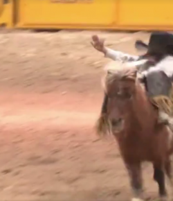 Tuesday Video: Cutest Cowboy of the Internet