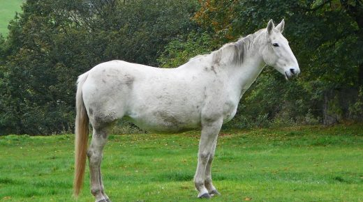Your Turn: Horses Are a Lifelong Commitment