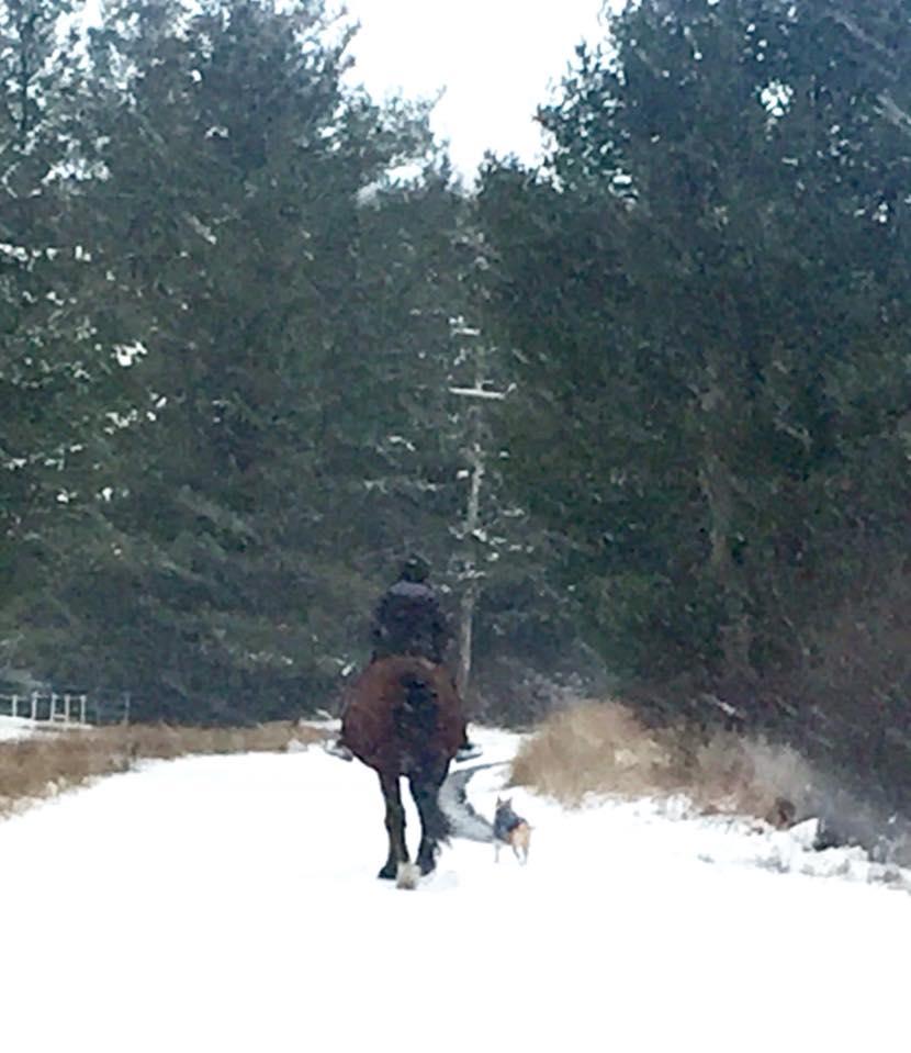winter horse management