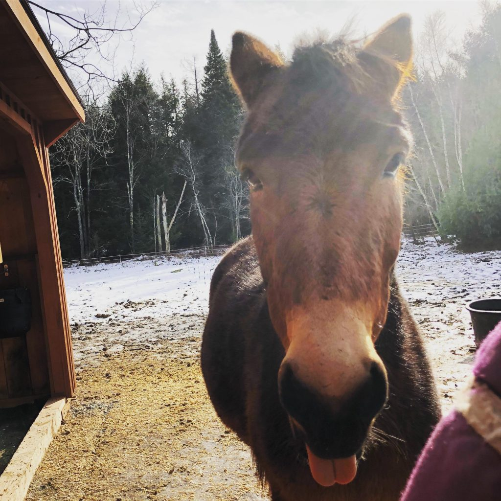winter mule