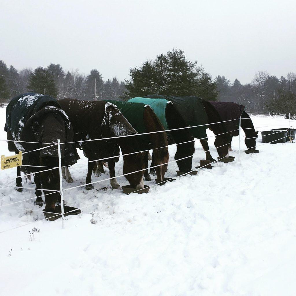 winter horse farm prep
