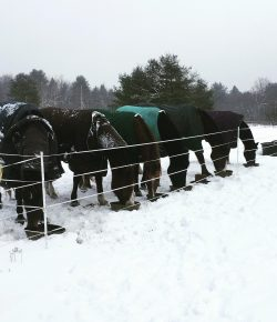 Barn From the Ground Up: A Little Winter Prep Goes a Long Way!