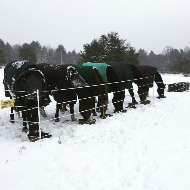 winter horse farm prep