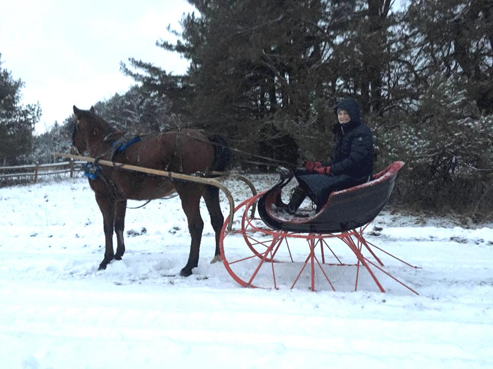 winter horse sleigh riding