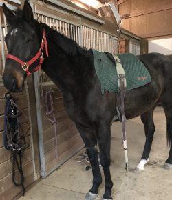 Meagan's RRP Journal: Flash the Failed Racehorse & Black Stallion Wannabe