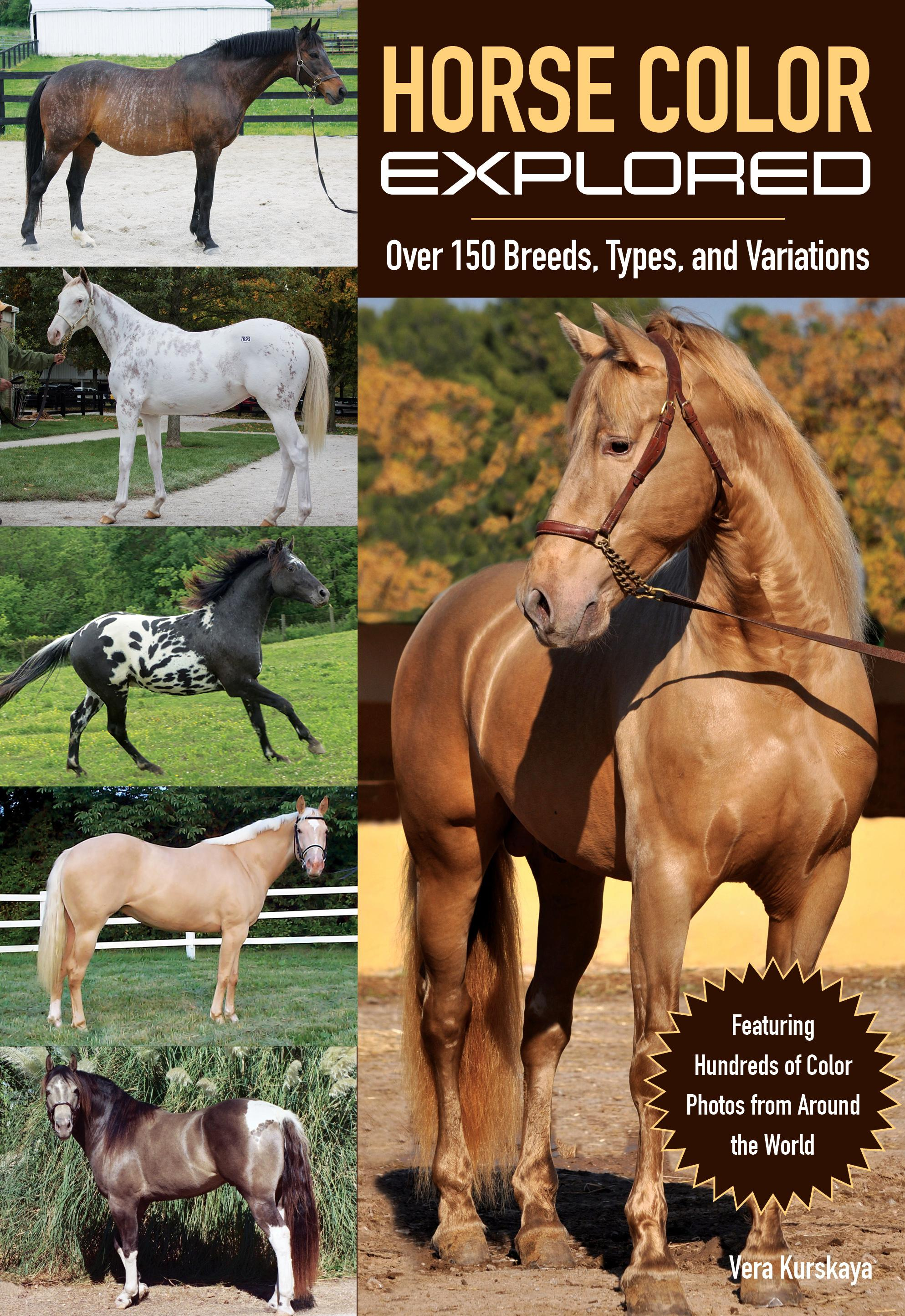 Shade Shifters Why Horses Change Color Horse Nation