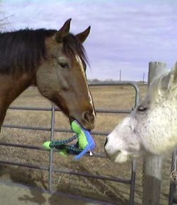 Photo Challenge: 9 Inventive Horses Having Fun With Toys