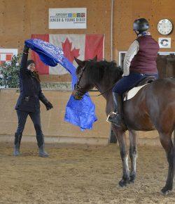 A Clinic With Canada's Horse Whisperer: Lindsey Partridge & Harmony Horsemanship 101