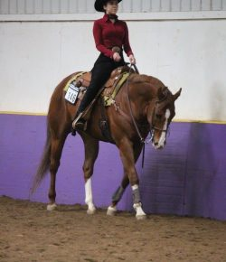 The Academic Equestrian: 8 Ways to Ride In College on a Tight Budget