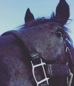 5 Horse Sales Phrases & What They Really Mean