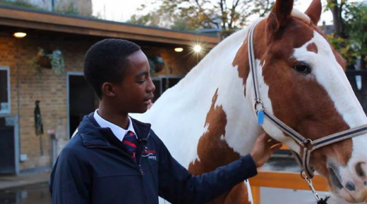 Standing Ovation by Ovation Riding: Ebony Horse Club
