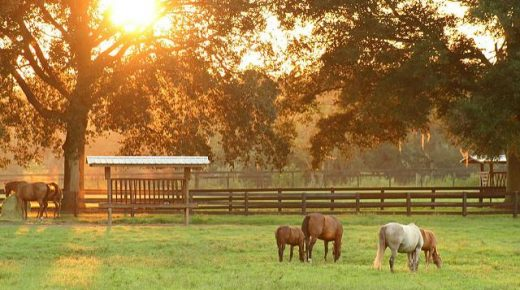 Lighthoof: Designing a Horse Friendly Farm, Part 1