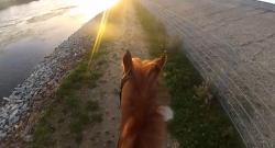 World Equestrian Helmet Cam: The Perfect Ride